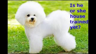 👉🏾 👉🏾 👉🏾 How to House Train Bichon Frise Puppies 👈🏾 👈🏾 👈🏾
