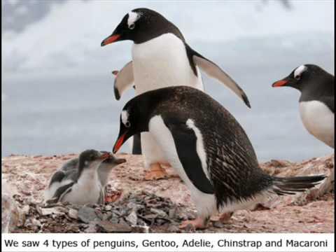 CI 447- Antarctica