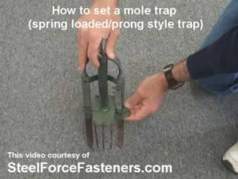 How To Set A Mole Trap Spring Loaded Or Spike Style Mole Trap