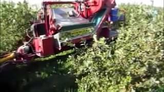 9 10 13 Mechanical Aronia Berry Harvester - Iowa
