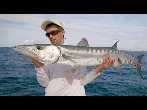 Barracuda on the Castings - 4K