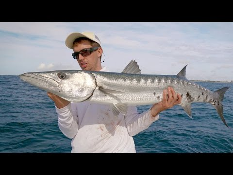 Barracuda on the Castings - 4K