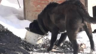 Лапа против собаки
