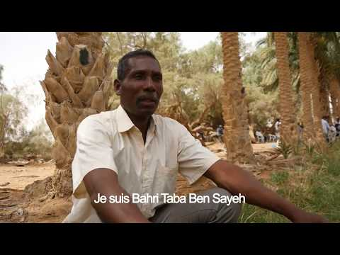 Paroles de phœniciculteur - Mr Bahri