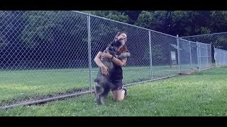 Best Dog Training in Columbus, Ohio! 2 Year Old Standard Schnauzer, Dodger!