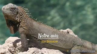 Bonaire, une destination appréciée pour sa nature et la plongées. 4K