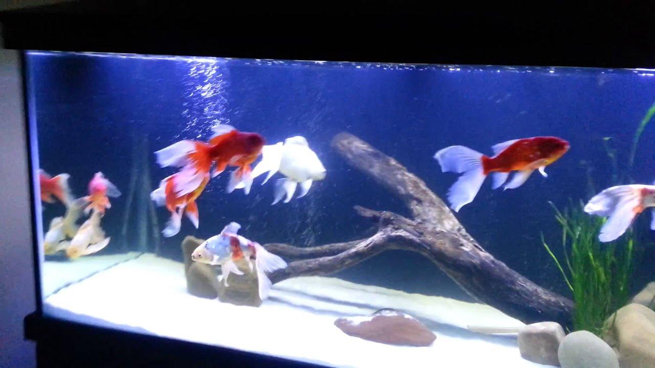 Wunderschönen Aquarium 1000 Litres
