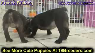 French Bulldog, Puppies, For, Sale, in, Mobile, County, Alabama, AL, Huntsville, Morgan, Calhoun, Et