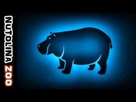 Hippo sounds / Hippo noise / Animal sounds hippo