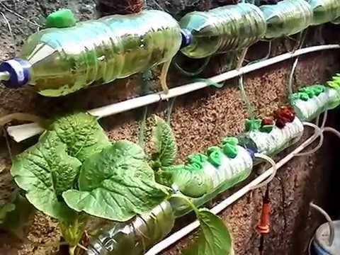 Hidroponik Dari Botol Plastik Bekas 2