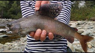 Огромные хариусы Красивые поклевки Кузнецкий Алатау (Big Graylings Beautiful flyfishing bites)