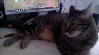 Кошка играет в майнкрафт!