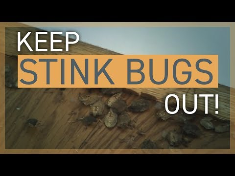 Brown Marmorated Stink Bug Control: Keeping Stink Bugs Out of Your House