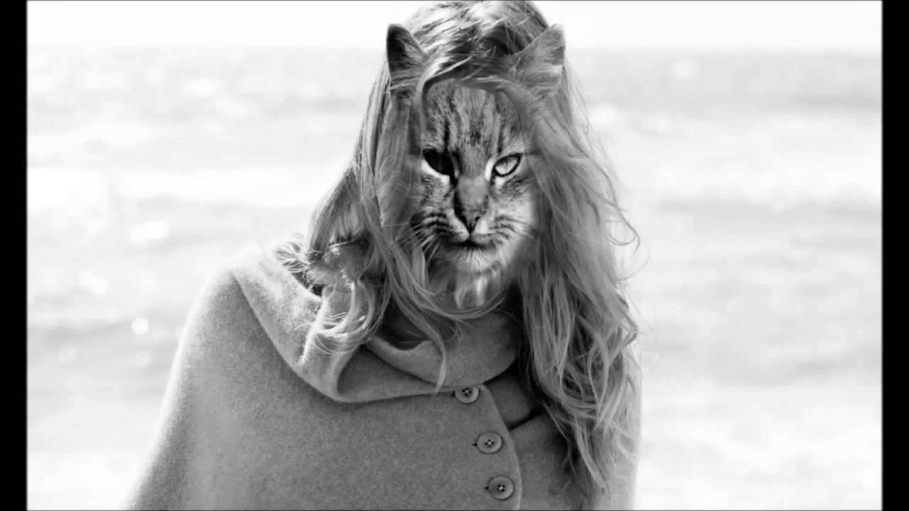 wilfred brimley cat