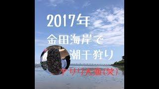 2017年5月28日に千葉県の木更津市にある金田海岸へ潮干狩りをや...
