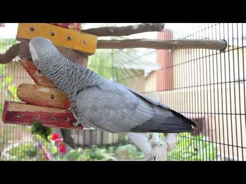 Parrot Diet & Enrichment