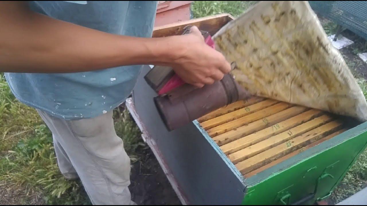 """Как объединить рой с пчелиной семьёй...""""Моё пчеловодство"""". пересадка#простой способ# роеловство"""