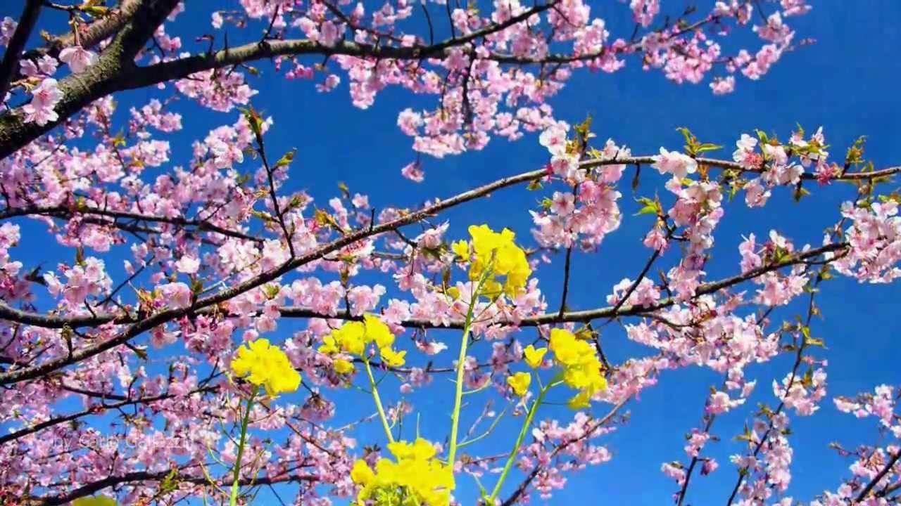 I dik dik il primo giorno di primavera youtube for Immagini desktop primavera
