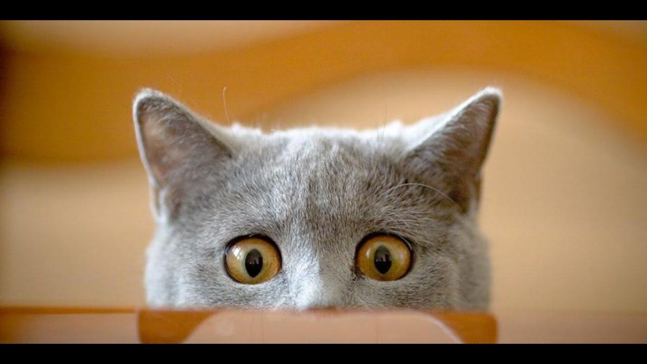 Funny cats videos pilation November 2016 Cute Cats