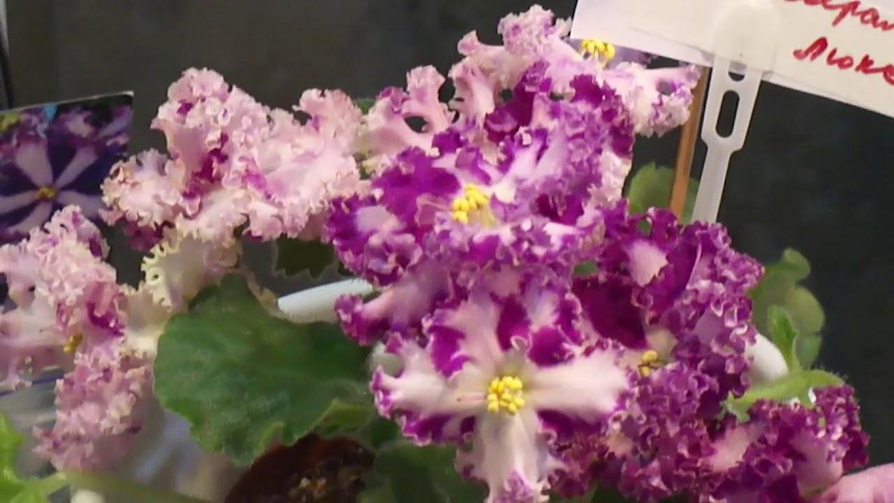 🌱Сорта Фуксий !!! Черенкам 2 месяца и уже цветут !!! 🌱 - YouTube