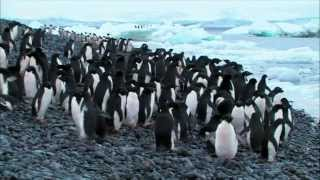 (2.4) Voyages au bout du Monde - L'Antarctique et les Iles Malouines