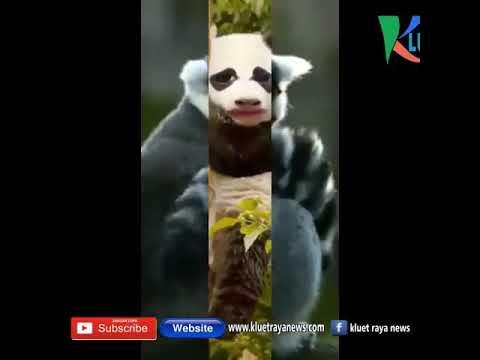 Meme Lucu  Dari Aceh