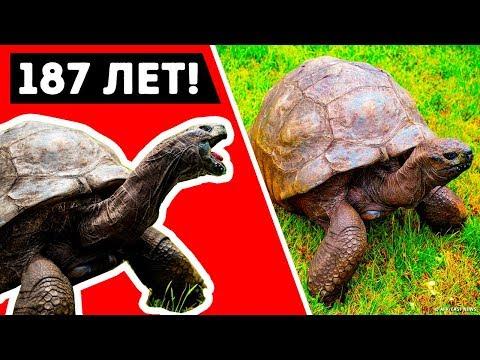 Самое старое животное из живущих на планете Земля стало легендой