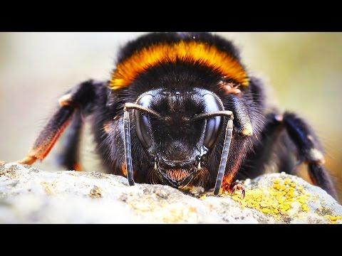 Gigantisches Insektensterben: Rückgang von bis zu 80 Prozent! - Clixoom Science & Fiction