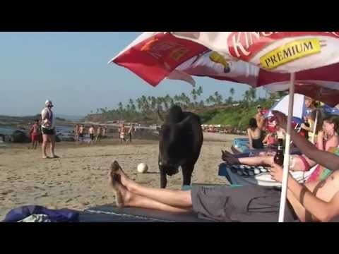 India: The Goa Experience
