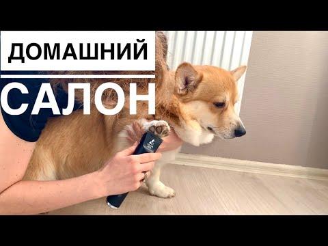 Машинка для стрижки собак MAJOR DOG HUNFRISE 22 😀 стрижем Таффи дома😬