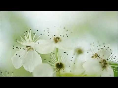 A. Vivaldi: Op. 2 n. 1 - Sonata for violin & b.c. in G minor (RV 27) / Ensemble Pian & Forte