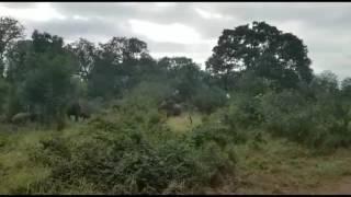 Early morning elephant antics...