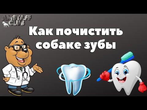 Вопрос: Как собаки переносят зубную боль?