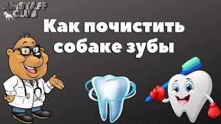 Зубной камень у собак, как чистить зубы собаке, чистка зубов стаффорду