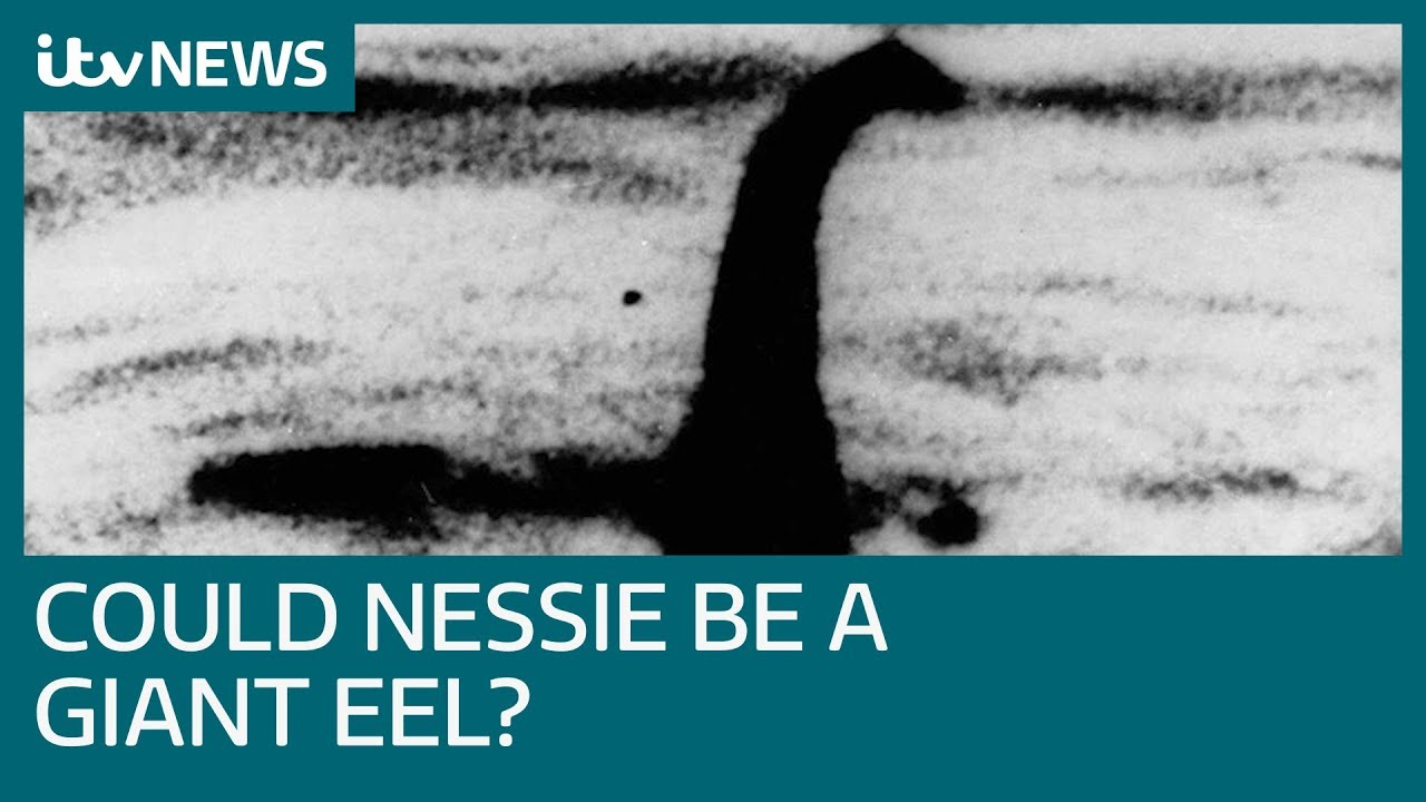 Loch Ness Monster could be giant eel, study reveals | ITV News