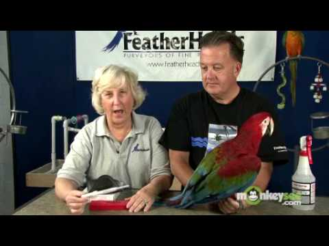 Bird Care – What to Use to Identify Your Bird