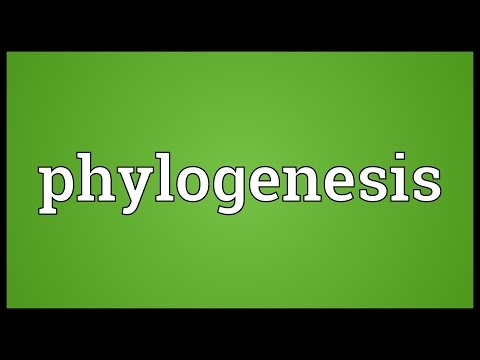 Phylogenesis Meaning