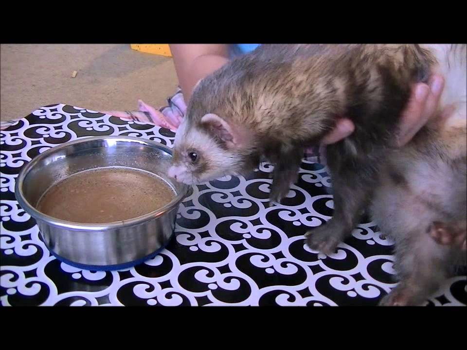 How I make my duck soup for my Ferrets