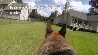 Leela The German Shepherd Dog (gopro Fetch Dog Harness Review)