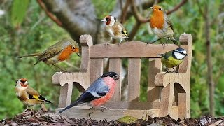 Video for Cats to Watch : Garden Birds at The Tiny Bench NEW