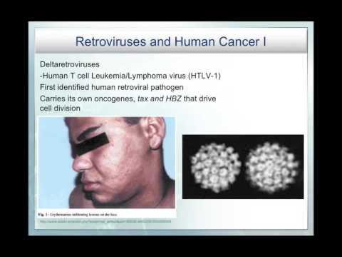 Viruses and Cancer & Oncogenes