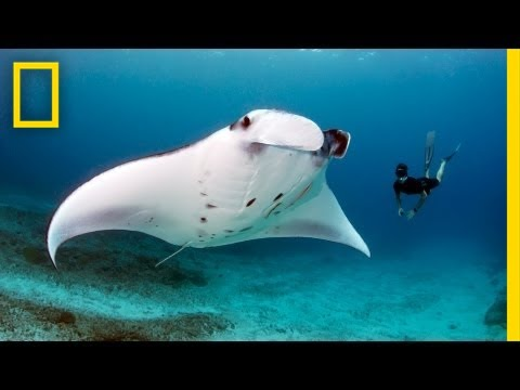 Andrea Marshall: Queen of the Manta Rays | Nat Geo Live