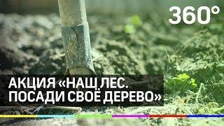 Скачать Акция Наш лес Посади своё дерево пройдёт в Подмосковье 21 сентября