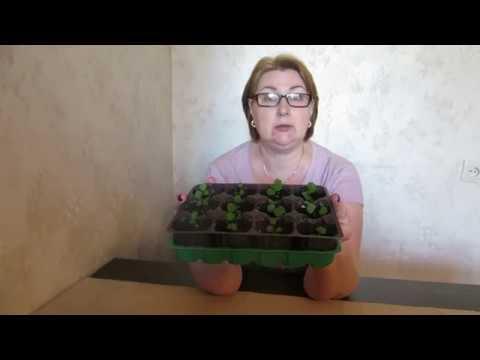 Вопрос: Взойдут ли семена из подмороженных ягод?