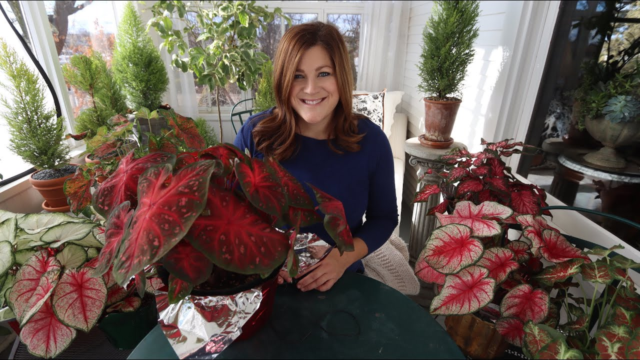 Caladiums The New Christmas Plant Garden Answer Youtube