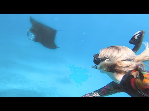 Swimming With Manta Rays In Indonesia