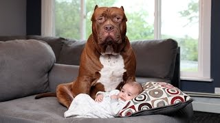 VIDEO: Dogs Protecting Babies In Danger