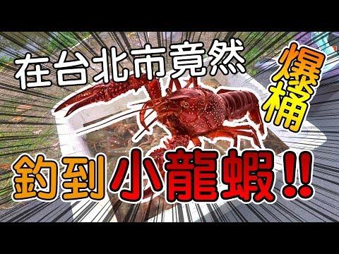 在台北市竟然釣到小龍蝦!!  連妹子釣螯蝦都爆桶!!!