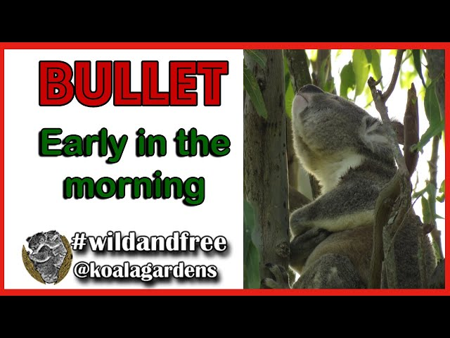 Bullet - early in the morning