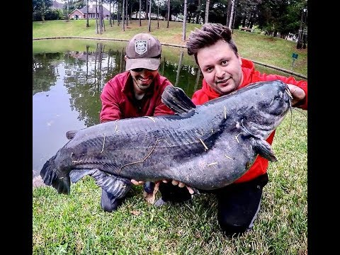 50lb+ BLUE CATFISH Caught Out Of A POND!